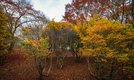 Τοπίο φθινοπώρου στο Κιότο, Ιαπωνία Στοκ Εικόνα