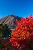 Τοπίο φθινοπώρου της Ιαπωνίας Στοκ Εικόνες