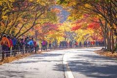 Τοπίο φθινοπώρου της Κορέας, εθνικό πάρκο Naejangsan στην εποχή φθινοπώρου, Νότια Κορέα Στοκ εικόνες με δικαίωμα ελεύθερης χρήσης