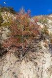 Τοπίο φθινοπώρου της πόλης διαβόλων ` s σχηματισμού βράχου στο βουνό Radan, Σερβία Στοκ φωτογραφία με δικαίωμα ελεύθερης χρήσης