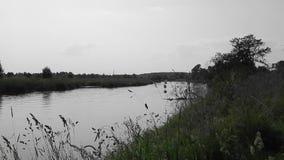 Τοπίο φθινοπώρου της φύσης στον ποταμό με την κίτρινη κινηματογράφηση σε πρώτο πλάνο φύλλων απόθεμα βίντεο