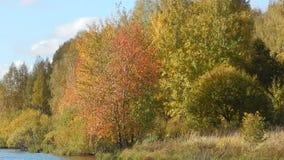 Τοπίο φθινοπώρου της φύσης στον ποταμό με την κίτρινη κινηματογράφηση σε πρώτο πλάνο φύλλων φιλμ μικρού μήκους