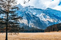 Τοπίο φθινοπώρου του κομψού πεύκου στο βουνό χιονιού δράκων νεφριτών, Lijiang, Yunnan, Κίνα στοκ φωτογραφίες
