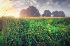 Τοπίο φθινοπώρου του πράσινου λιβαδιού στα ξημερώματα Τοπίο φθινοπώρου του λιβαδιού με τα δέντρα στον ορίζοντα Στοκ Εικόνες