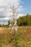 Τοπίο φθινοπώρου Το ξηρό λουλούδι σε ένα θολωμένο υπόβαθρο Στοκ Φωτογραφία