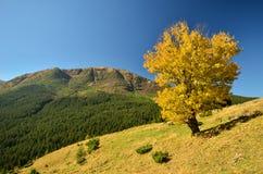 Τοπίο φθινοπώρου των βουνών Στοκ φωτογραφίες με δικαίωμα ελεύθερης χρήσης