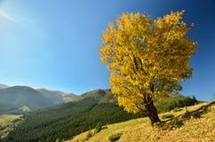 Τοπίο φθινοπώρου των βουνών Στοκ φωτογραφία με δικαίωμα ελεύθερης χρήσης