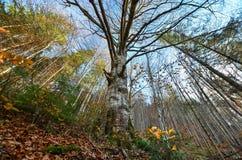 Τοπίο φθινοπώρου των βουνών Στοκ Φωτογραφίες