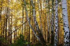 Τοπίο φθινοπώρου των νότιων Ουραλίων Στοκ Εικόνες