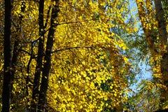 Τοπίο φθινοπώρου των νότιων Ουραλίων Στοκ εικόνα με δικαίωμα ελεύθερης χρήσης