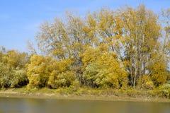 Τοπίο φθινοπώρου Όχθη ποταμού με τα δέντρα φθινοπώρου Λεύκες στο β Στοκ φωτογραφία με δικαίωμα ελεύθερης χρήσης