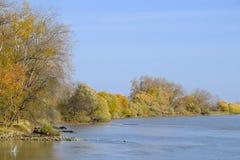 Τοπίο φθινοπώρου Όχθη ποταμού με τα δέντρα φθινοπώρου Λεύκες στο β Στοκ εικόνα με δικαίωμα ελεύθερης χρήσης