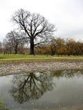 τοπίο φθινοπώρου Στοκ Εικόνα