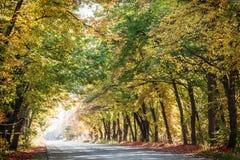 Τοπίο φθινοπώρου στοκ εικόνες με δικαίωμα ελεύθερης χρήσης