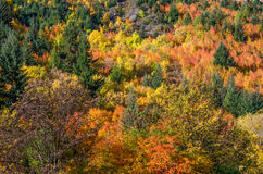 Τοπίο φθινοπώρου Arrowtown Στοκ φωτογραφίες με δικαίωμα ελεύθερης χρήσης