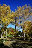 Τοπίο φθινοπώρου Arrowtown Στοκ Εικόνα