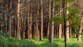Τοπίο φθινοπώρου Taizhou στοκ εικόνες