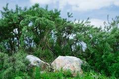 τοπίο φυσικό στοκ εικόνες
