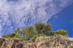 Τοπίο φύσης του εθνικού πάρκου Gargano: ακτή των νησιών ` Tremiti archipelag, Ιταλία Apulia Halepensis πεύκων Στοκ Εικόνες