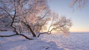 Τοπίο χειμερινής φύσης το παγωμένο σαφές πρωί Καταπληκτικά χιονώδη δέντρα στην ακτή της λίμνης πάγου που καλύπτεται από το χιόνι  στοκ εικόνες
