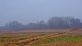 Τοπίο χειμερινού έλους της Misty στη φλαμανδική επαρχία στοκ φωτογραφία με δικαίωμα ελεύθερης χρήσης