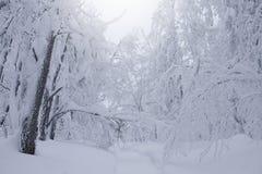 Τοπίο χειμερινών δασικό σύννεφων Στοκ Εικόνες