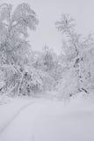 Τοπίο χειμερινών δασικό σύννεφων Στοκ Εικόνα