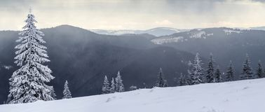 Τοπίο χειμερινών βουνών με τα χιονισμένα δέντρα πεύκων στοκ φωτογραφίες