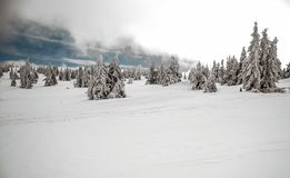 Τοπίο χειμερινών βουνών με το χιόνι, τα μικρούς δέντρα και το μπλε ουρανό με τα σύννεφα Στοκ φωτογραφία με δικαίωμα ελεύθερης χρήσης