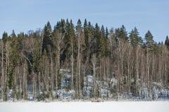 Τοπίο χειμερινών τομέων με τα παγωμένα δέντρα αναμμένα από τη μαλακή σκηνή τοπίων ηλιοβασιλέματος ελαφριά χιονώδη στους θερμούς τ Στοκ φωτογραφίες με δικαίωμα ελεύθερης χρήσης