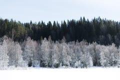 Τοπίο χειμερινών τομέων με τα παγωμένα δέντρα αναμμένα από τη μαλακή σκηνή τοπίων ηλιοβασιλέματος ελαφριά χιονώδη στους θερμούς τ Στοκ Εικόνα