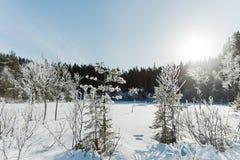 Τοπίο χειμερινών τομέων με τα παγωμένα δέντρα αναμμένα από τη μαλακή σκηνή τοπίων ηλιοβασιλέματος ελαφριά χιονώδη στους θερμούς τ Στοκ Φωτογραφίες