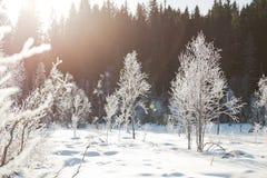 Τοπίο χειμερινών τομέων με τα παγωμένα δέντρα αναμμένα από τη μαλακή σκηνή τοπίων ηλιοβασιλέματος ελαφριά χιονώδη στους θερμούς τ Στοκ εικόνα με δικαίωμα ελεύθερης χρήσης