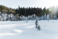 Τοπίο χειμερινών τομέων με τα παγωμένα δέντρα αναμμένα από τη μαλακή σκηνή τοπίων ηλιοβασιλέματος ελαφριά χιονώδη στους θερμούς τ Στοκ φωτογραφία με δικαίωμα ελεύθερης χρήσης