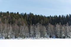 Τοπίο χειμερινών τομέων με τα παγωμένα δέντρα αναμμένα από τη μαλακή σκηνή τοπίων ηλιοβασιλέματος ελαφριά χιονώδη στους θερμούς τ Στοκ εικόνες με δικαίωμα ελεύθερης χρήσης