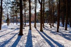 Τοπίο χιονιού Στοκ εικόνες με δικαίωμα ελεύθερης χρήσης