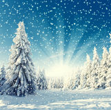 Τοπίο - χιονοπτώσεις Στοκ εικόνες με δικαίωμα ελεύθερης χρήσης