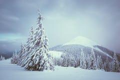 Τοπίο Χριστουγέννων με το δέντρο έλατου στο χιόνι Στοκ εικόνα με δικαίωμα ελεύθερης χρήσης