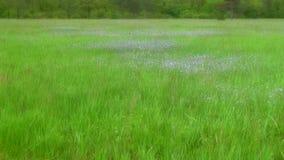 Τοπίο όμορφο λιβάδι στα ξύλα στο πάρκο με τα λουλούδια και την πράσινη χλόη Μαλακή θαμπάδα εστίασης απόθεμα βίντεο