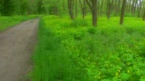 Τοπίο όμορφο λιβάδι στα ξύλα στο πάρκο με τα λουλούδια και την πράσινη χλόη Μαλακή θαμπάδα εστίασης φιλμ μικρού μήκους