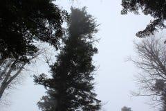 Τοπίο Στοκ Φωτογραφίες
