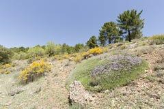 Τοπίο Cañadas de Haches de Arriba στοκ εικόνα