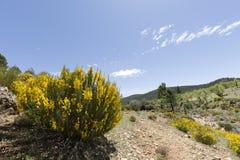 Τοπίο Cañadas de Haches de Arriba στοκ εικόνα με δικαίωμα ελεύθερης χρήσης