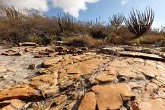 Τοπίο Caatinga στη Βραζιλία στοκ εικόνα