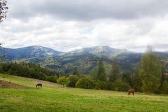 Τοπίο Carpathians στο auturmn Στοκ Εικόνες