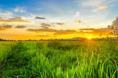 Τοπίο cornfield και του πράσινου τομέα με το ηλιοβασίλεμα στο αγρόκτημα, Στοκ Φωτογραφία