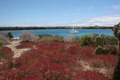 Τοπίο Galapagos, Ισημερινός Στοκ Εικόνες
