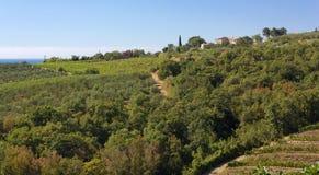 Τοπίο Hill μεταξύ Muggia και Ankaran Στοκ εικόνες με δικαίωμα ελεύθερης χρήσης