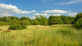 Τοπίο Karosta με το λιβάδι και τα δέντρα, Liepaja, Λετονία Στοκ εικόνες με δικαίωμα ελεύθερης χρήσης