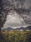 Τοπίο Lanzarote Στοκ Φωτογραφία